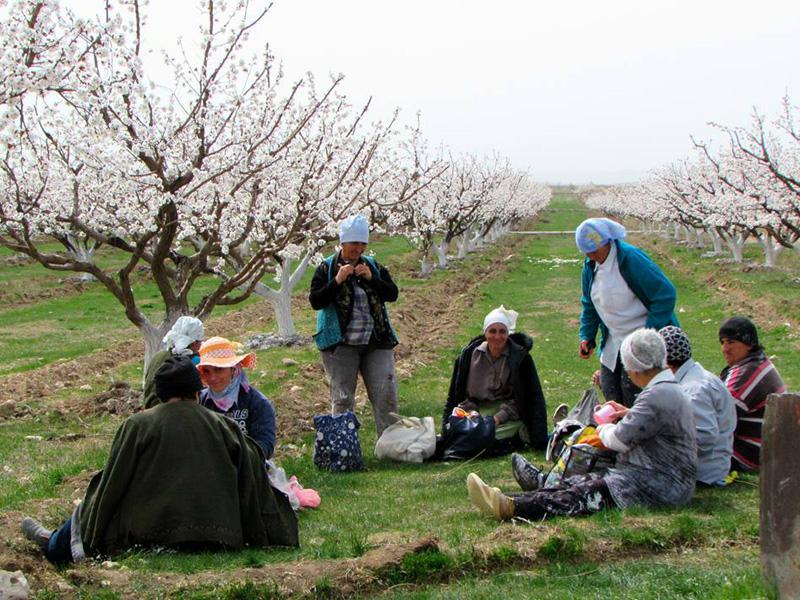 Կներդրվի գյուղատնտեսական ապահովագրության համակարգ