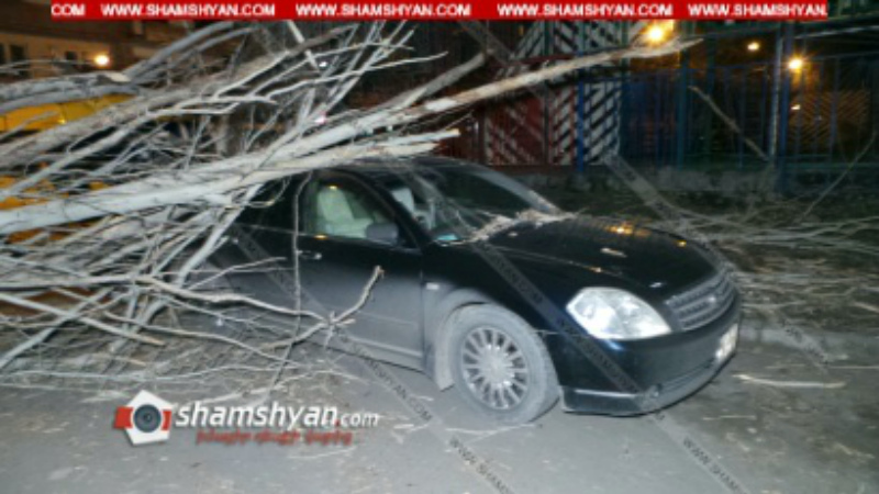 Երևանում հաստաբուն բարդին արմատից պոկվել ու տապալվել է գետնին՝ վնասելով ավտոմեքենաներ