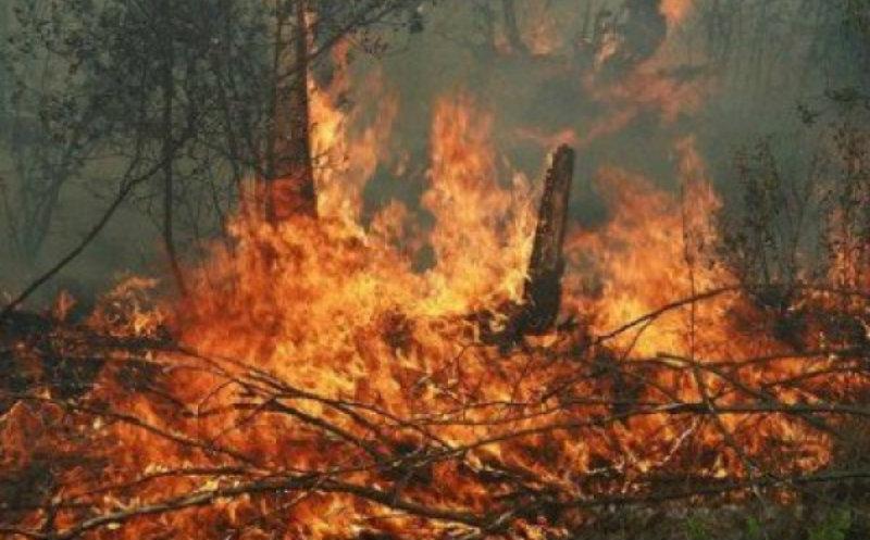 Լիճք գյուղի մոտակայքում մոտ 8000 քմ անտառածածկ տարածք է այրվում