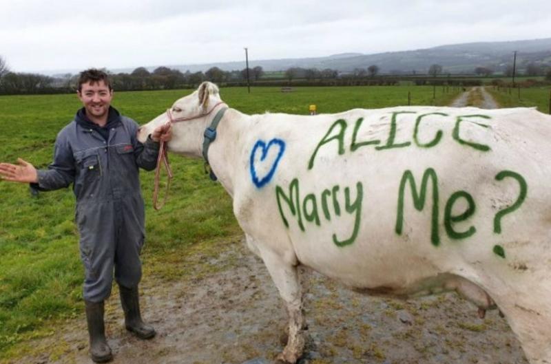 Բրիտանացի ֆերմերը կովի միջոցով ընկերուհուն ամուսնության առաջարկ է արել