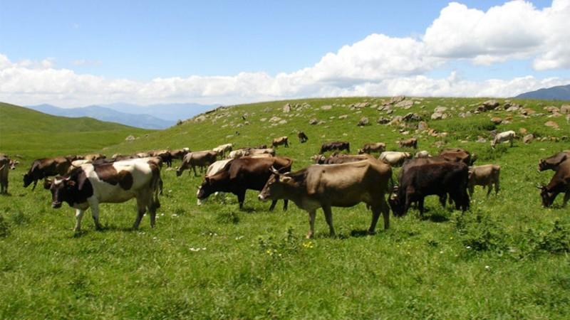 Գյուղատնտեսական ծառայությունների կենտրոնը խնդրում է բարձր պատասխանատվությամբ մոտենալ գյուղատնտեսական կենդանիների պատվաստումներին