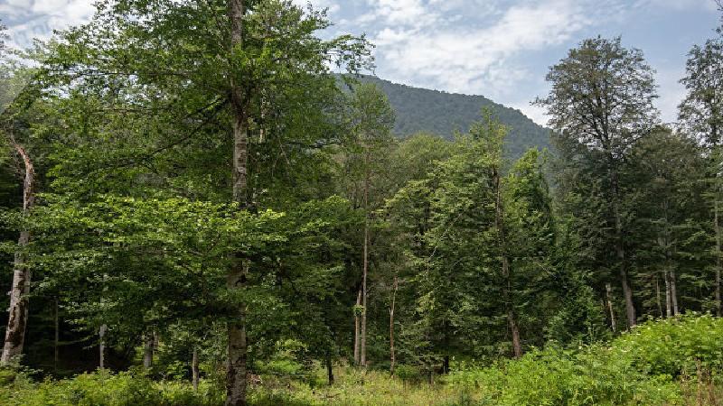 Մեղադրանքներ են առաջադրվել Լոռու մարզի անտառային ֆոնդի պահպանության համար պատասխանատու ևս ինը պաշտոնատար անձանց