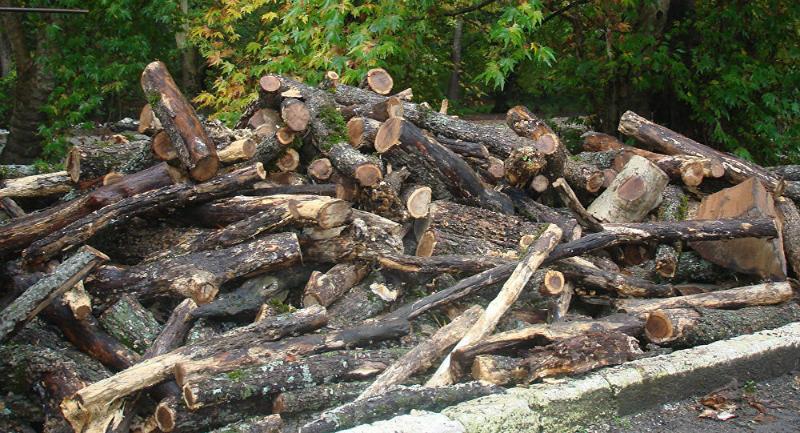 Իջևանի ոստիկանները փայտածուխի արտադրամասում ապօրինի փայտանյութ են հայտնաբերել