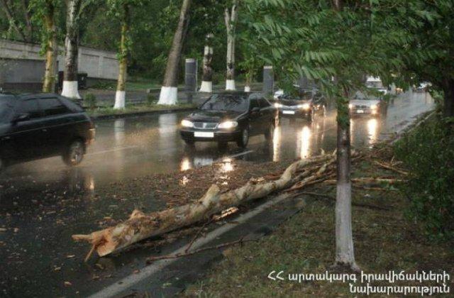 Եղեգնաձորում ու Երևանի տարբեր թաղամասերում ուժգին քամու հետևանքով ծառեր են կոտրվել