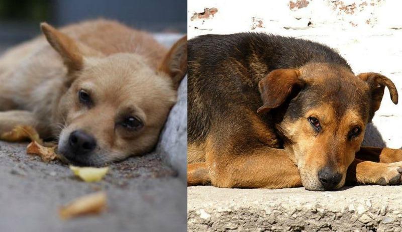 Քայլ արա՛, ի պաշտպանություն անօգնական կենդանիների. կենդանասերների ակցիան