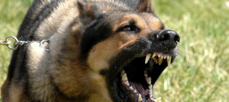 Մուֆլոններ են հոշոտվել. Կենդանաբանական այգում շների ներթափանցման երկրորդ դեպքն է գրանցվել