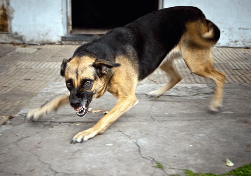 Կատաղած շունը մտել է բնակելի շենքերից մեկի նկուղ.
