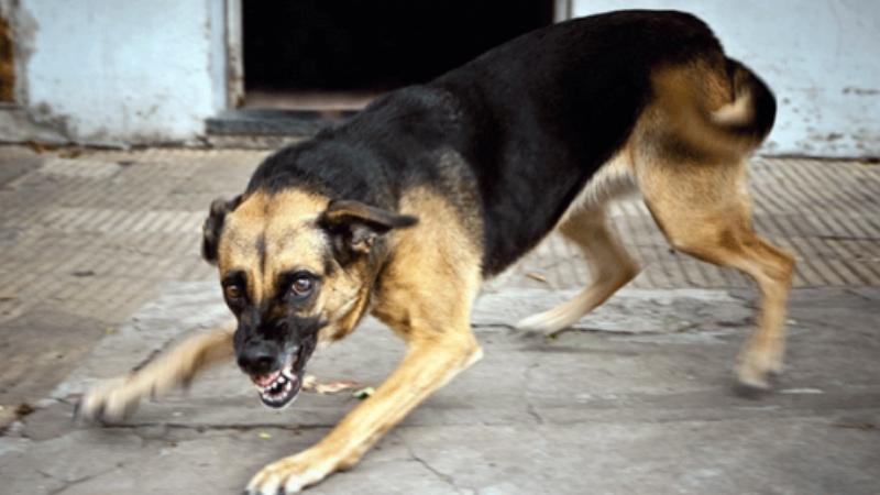 Ծաթեր գյուղի բնակիչը շանը տարել է տուն և բաց թողել 78-ամյա զոքանչի վրա․ ՔԿ-ն մանրամասներ է ներկայցնում