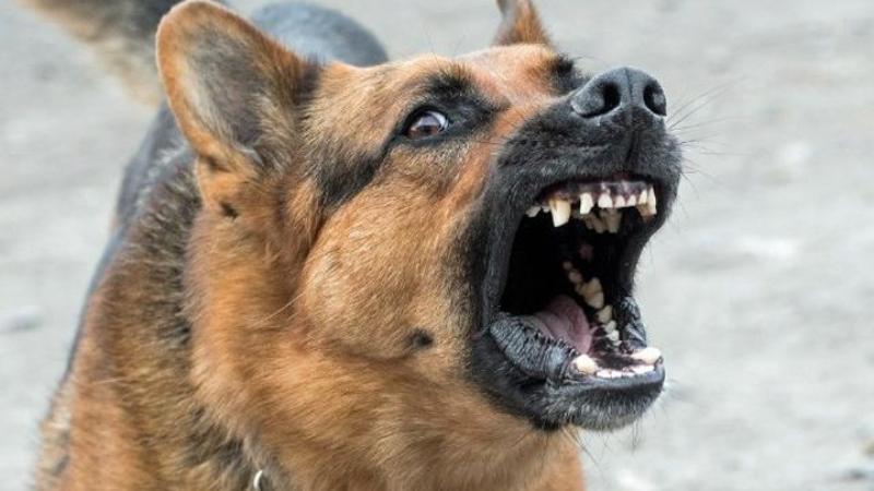 Լուսառատ գյուղում շունը 3 հոգու է կծել. տուժածներից մեկի առողջական վիճակը գնահատել են միջին ծանրության, մյուսներինը՝ բավարար