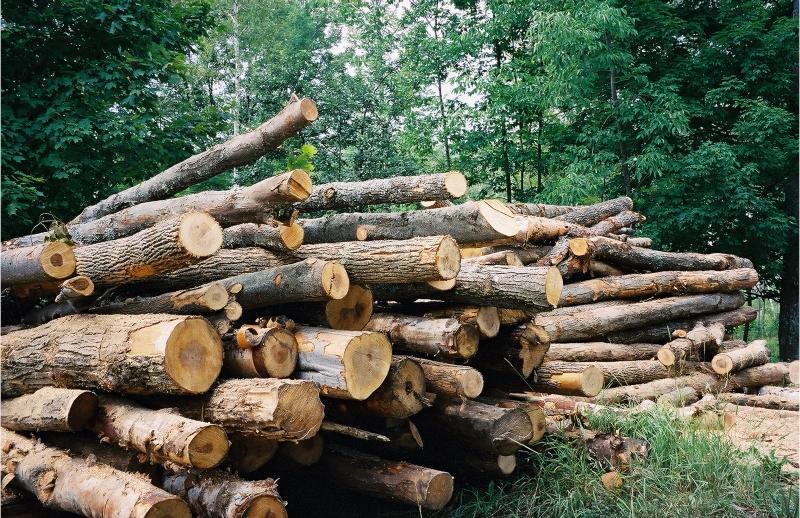 Դիլիջանի անտառից վառելափայտ ձեռք բերելու փաստի առթիվ նախապատրաստվում են նյութեր