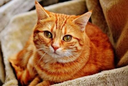 Իտալիայում կատուն իր տիրուհուց ժառանգություն Է ստացել 1,5 մլն եվրո