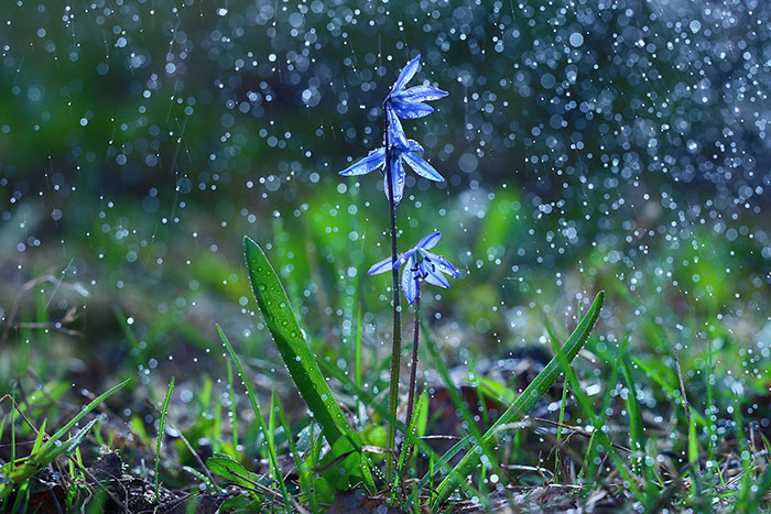 Սպասվում է անձրև. եղանակն առաջիկա օրերին