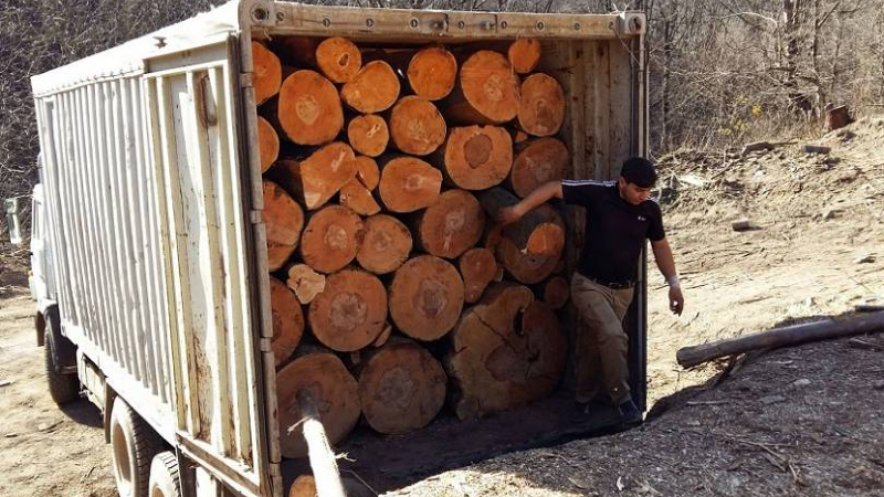 Մեկուկես ժամում Լոռիում հայտնաբերվել է առերևույթ ապօրինի փայտանյութով 19 բեռնատար. դատախազություն