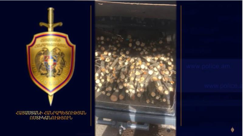 Ապօրինի անտառահատումներ Սյունիքում․ Գորիսի ոստիկանների բացահայտումը