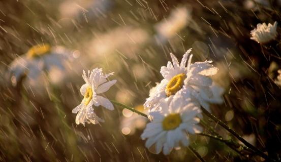 Սպասվում է անձրև և ամպրոպ. եղանակն առաջիկա օրերին