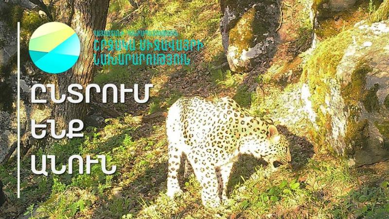 Ժամանակն է անուն տալ նաև Տավուշի մարզի կենդանական աշխարհի նոր բնակչին․ շրջակա միջավայրի նախարարությունը դիմում է քաղաքացիներին