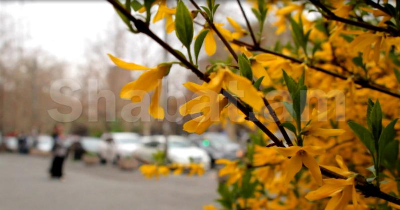 Երևանգարուն1shabat.am2.jpg