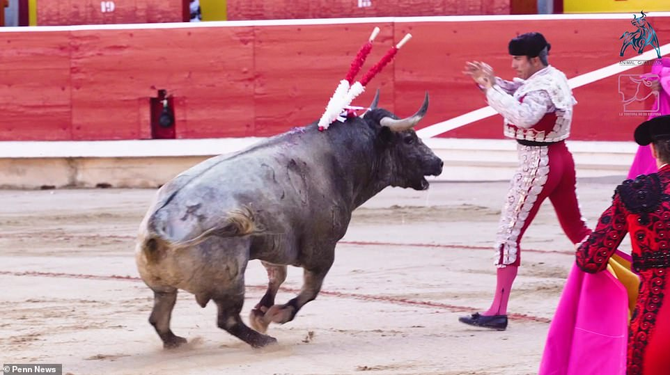 16103776-7251707-Dozens_of_bulls_are_slaughtered_each_year_during_Pamplona_s_San_-a-5_1563281787798.jpg