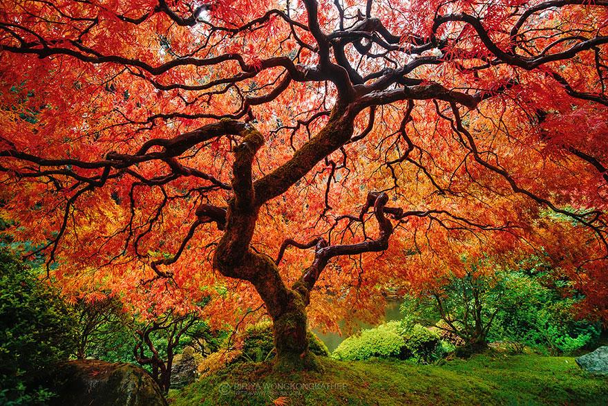 AutumnTransformation06.jpg