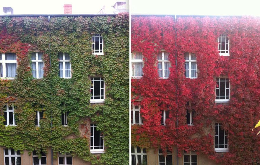 AutumnTransformation07.jpg
