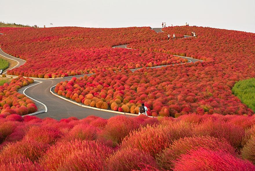 AutumnTransformation13.jpg