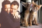 Հայտնիների և կատուների նմանությունը (զվարճալի ֆոտոշարք)