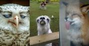 Կենդանիներ, որ ընդհանրապես ֆոտոգենիկ չեն (լուսանկարներ)