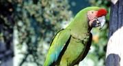 Попугай, исполнивший песню Эминема и Рианны, стал звездой сети (видео)