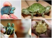 Мутанты среди животных - страх и ужас, жалость и сочувствие(26 фото)