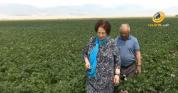 Ռոզա Ծառուկյանի գլխավորած «Մուլտի Ագրո»-ն աշխատատեղեր է ապահովում 100-ավոր վարդենիսցիների ...