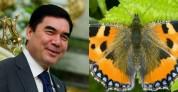 Թուրքմենստանի նախագահը կպայքարի թիթեռների դեմ