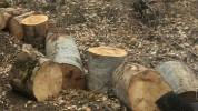 Ապօրինի անտառահատման դեպքերը կոծկելու դիմաց ոստիկանը կաշառք է ստացել