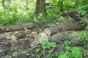 Փամբակ գյուղի բնակիչն ապօրինաբար ծառեր է կտրել ու օգտագործել տան ջեռուցման համար