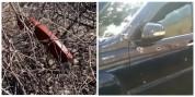 Նոր մանրամասներ Դիլիջանում հնչած կրակոցներից. տեսանյութ