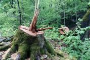 60-ամյա տղամարդը տասնյակ ծառեր է հատել Եղեգնուտում (տեսանյութ)