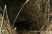 Փրկարարները ջրատարից դուրս են բերել խոշոր եղջերավոր կենդանուն