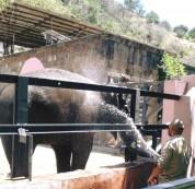 Կենդանաբանական այգին հրավիրում է միասին անցկացնել Վարդավառի տոնը