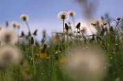 Ամենահայտնի մայիսյան կանաչիները՝ ըստ գիտնականների