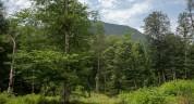 «Հայանտառ» ՊՈԱԿ-ի Ճամբարակի անտառտնտեսության տնօրենը ապօրինություններ է թույլ տվել
