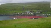Ֆարոյան կղզիներում տեղի է ունեցել ավանդական կետորսությունը՝ ծովը պատելով արյան կարմիրով (լ...