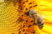 В Капане от укуса пчелы погиб человек - «Грапарак»