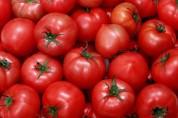 В России уничтожена 21 тонна армянских томатов
