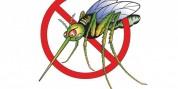 Մոծակներից ազատվելու 8 պարզ տարբերակ