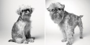 Ինչպես են ծերանում շները. հուզիչ ֆոտոշարք