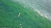 Австралиец заснял акулу рядом с ничего не подозревающими серфингистами (видео)