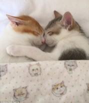 Այս կատուներն առանց իրար փաթաթվելու չեն կարողանում քնել (լուսանկարներ, տեսանյութ)