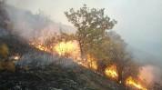«Դիլիջանի ազգային պարկ» ՊՈԱԿ-ի տարածքում բռնկված հրդեհը մարվել է