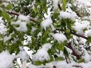 Ձյուն է տեղացել նաև Հայաստանի ամենատաք վայրում․ լուսանկարներ