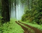 33 միլիոն դրամի վնաս անտառին. «Ժողովուրդ»
