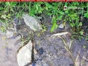 Ոսկու հանքի թափոնները լցվում են գետը․ Չքնաղ գետում հայտնաբերվել են մեծ թվով սատկած ձկներ